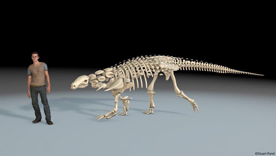 Cinema 4D mô phỏng bộ xương khủng long 3D tương tác với người dùng