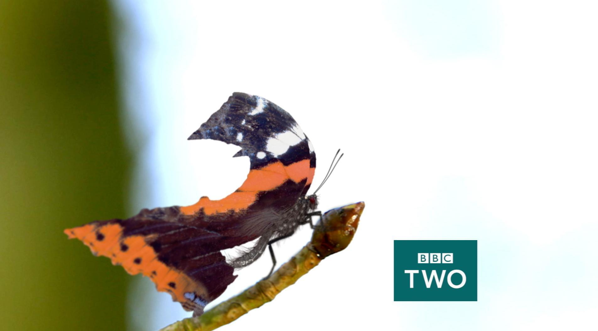 BBC TWO: Branding With Character